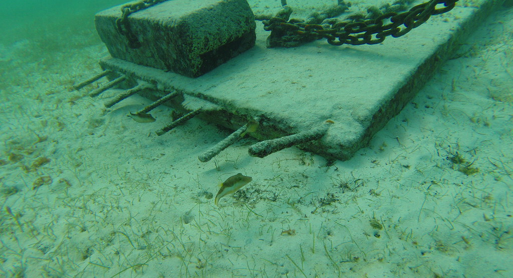 Yucatan trip photos from snorkling 11975602875_fd0baaec84_b