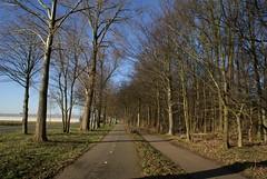 Fietspad langs de Bosrandweg