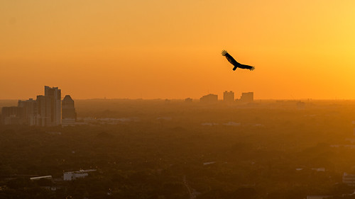 city sunset urban orange bird flying high haze nikon downtown miami nikkor f28 humid 180mm d600