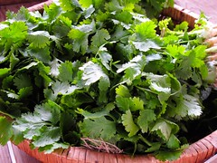 vegetable(0.0), flower(0.0), brassica rapa(0.0), produce(0.0), rapini(0.0), food(0.0), dish(0.0), annual plant(1.0), plant(1.0), herb(1.0), coriander(1.0),