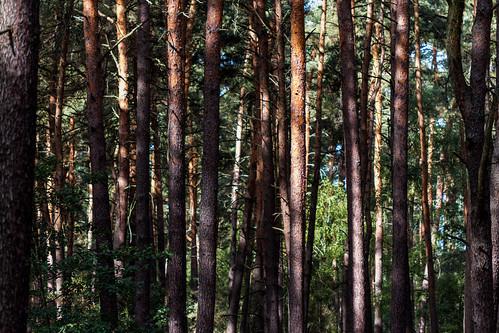 Wald, woods, forêt, bosque, floresta, лес, 森林, 森