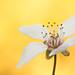 Spring - Flower - 2