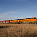 BNSF 8175 East at CP 855