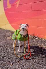 Happy leash boy