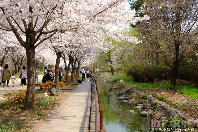 首爾林seoul forest (36)