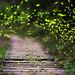 2017.04.20 螢火蟲 Fireflies