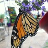 Butterfly heaven! Opens tomorrow. #butterflies #bflies #rva