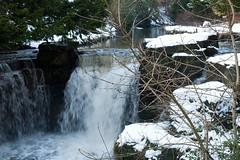 Winter 2013 (Jesmond Dene)  (3)