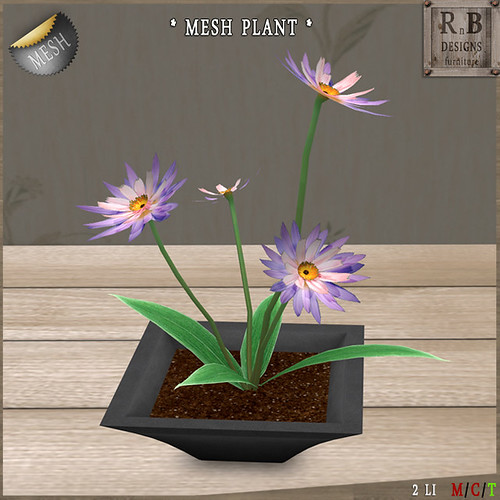 NEW MESH ! CHEAPIE ! *RnB* Mesh Potted Flowers - Dahlia (no mod)