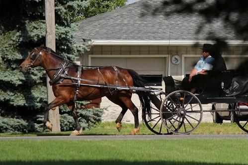 IMG_0167_Amish_Buggy