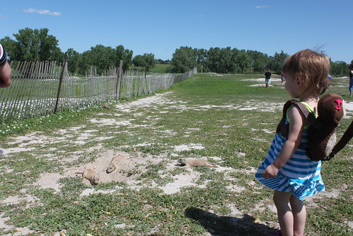 nati watching a small group of prairie dogs