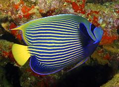 Fiji Fishes n' Friends