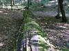 il tronco del pisolo