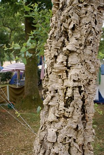 camping cork tree