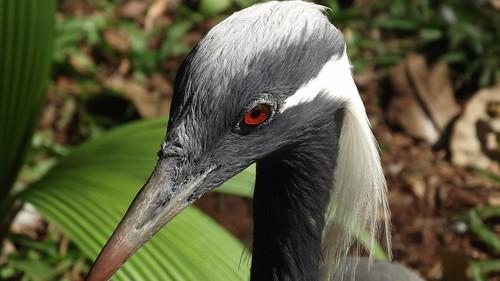 Parque das Aves - Foz do Iguaçu 2013