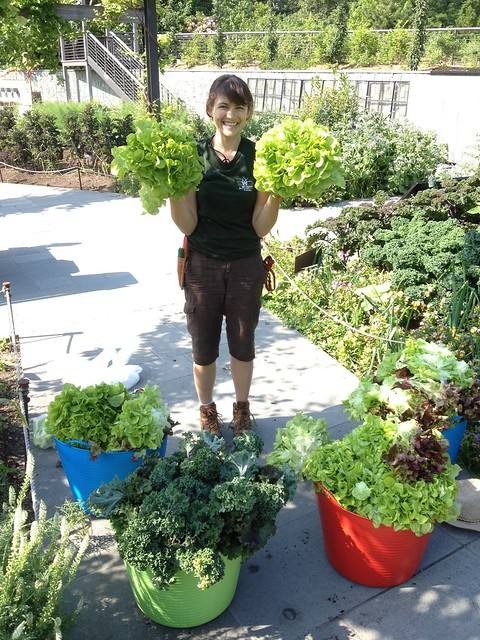 Melanie Rose Wilson, a horticulture intern at BBG, has been harvesting greens and other produce in the Herb Garden this summer. It is then delivered to a local church food pantry. Photo by Caleb Leech.