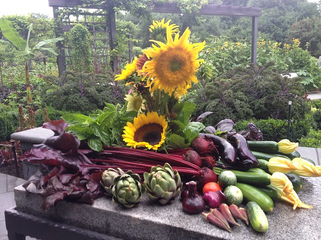 Beets, artichokes, squash, eggplant, and okra were among the bounty harvested from the Herb Garden and distributed to a nearby church's food pantry. Photo by Caleb Leech.