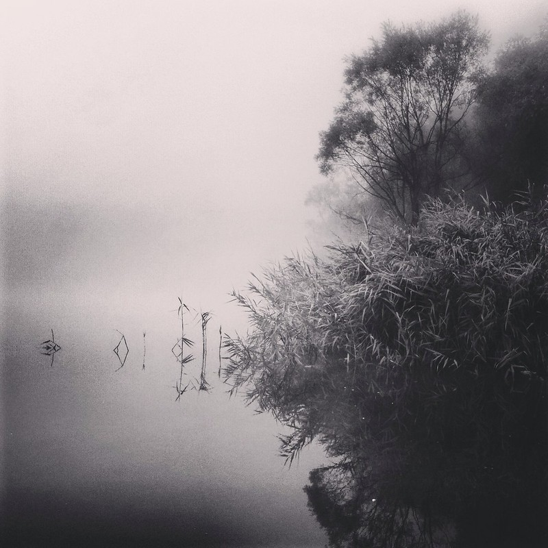 Into fog...