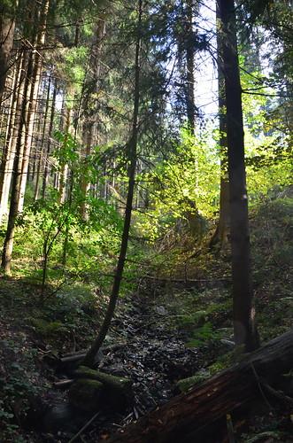 Ein Bach im Wald mit verwittertem Holz