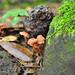 9-mushrooms-DSC_3524