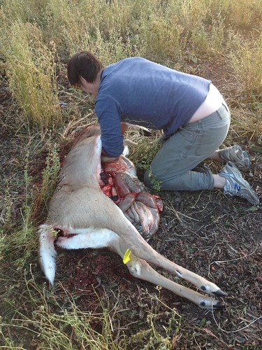 Gutting His Whitetail