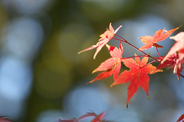 東京路地裏散歩 東急世田谷線沿線の紅葉