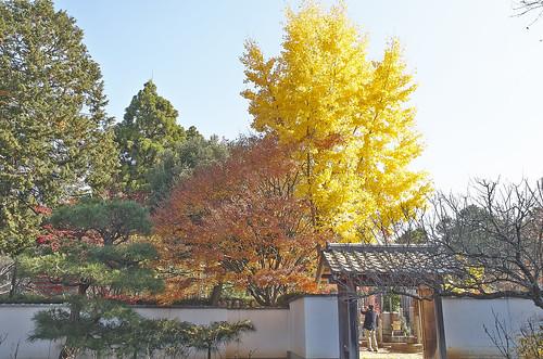 【写真】紅葉 : 西雲院