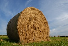 prairie, agriculture, straw, hay, field, grass, meadow, rural area, grassland,