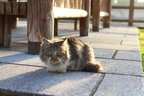 ネコさまがいらっしゃった (^^)