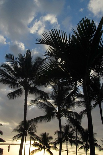 trees sunset sky sun clouds palms hawaii polynesia evening sundown silhouettes palmtrees tropical bigisland kailuakona 2014 outbacksteakhouse utilitylines hawaiicounty aliidrive hawaiiisland westhawaii northkona barryfackler barronfackler