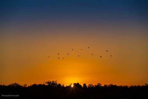 orange birds night sunrise gold golden twilight day unitedstates florida bayou naples fl hanusiak