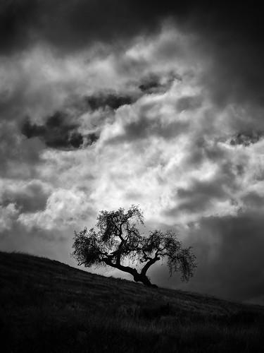 california sky bw storm tree monochrome clouds flickr outdoor sanjose elder portfolio geotag treescape 2014 em5 45200mm