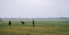 Horse and Donkeys