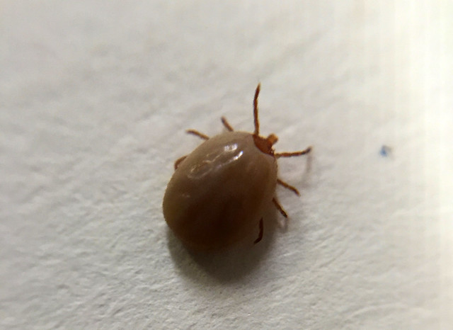 Tick Pics and Flicks