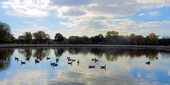 Flushing Meadows–Corona Park....Queens