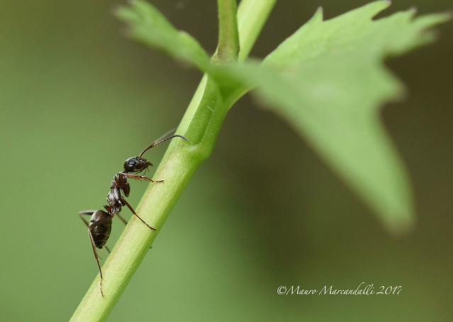 Ant at work