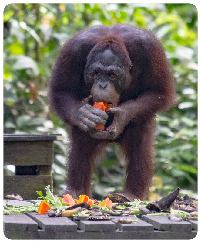 Borneo-20170413-_MG_8215