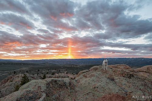 hartmanrocks sunset dog luna shibainu cute lichen