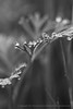 Water Drops in Black & White, 3.17.16