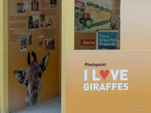 Ein Herz für Giraffen