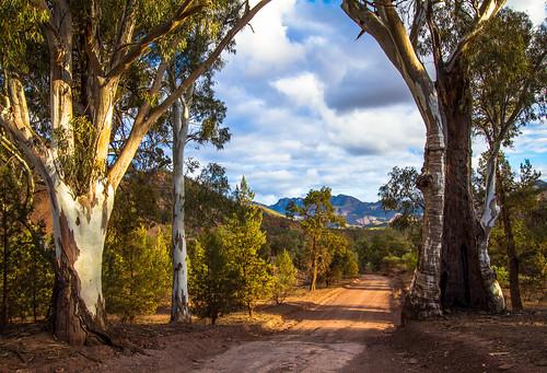 Twin Gums, Flinders Ranges South Australia [Explored]