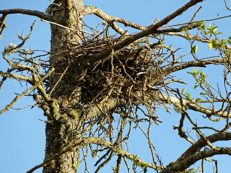 P1040939 - Crow Nest, Cefn Drum