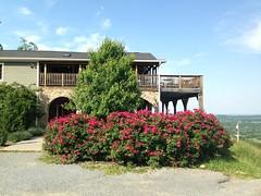 At Bluemont Vineyard