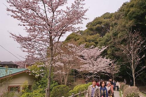 【写真】2013 桜 : 哲学の道/2018-12-24/IMGP9193