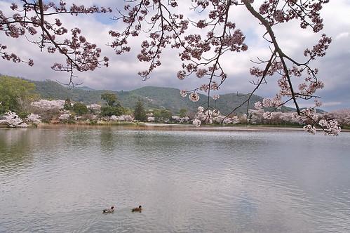 【写真】2013 桜 : 大覚寺/2020-09-15/IMGP9419