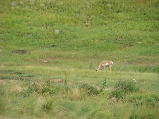 15  hert bij Wildlife road