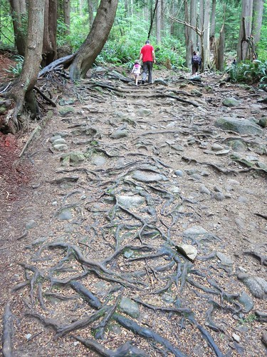 Tree root trail to Quarry Rock