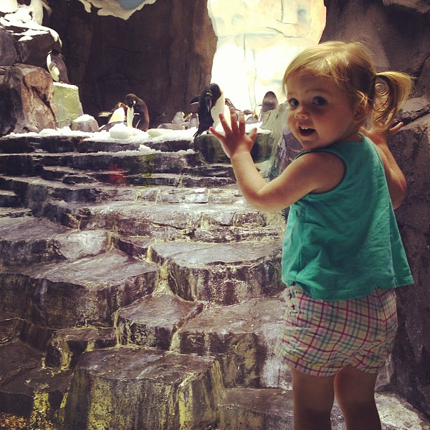 We had so much fun seeing the penguins this morning! #seaworld