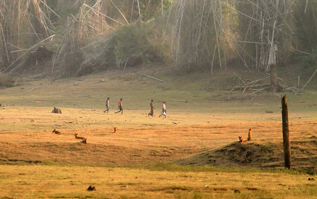 Kabini - Tribals and Wildlife