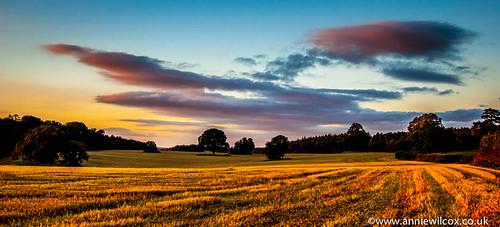 uk greatbritain sunset england europe britishisles unitedkingdom britain straw british stubble southstaffordshire